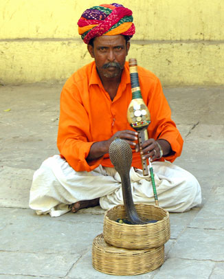 Image result for snake charmers photos
