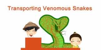 Transporting Venomous Snakes