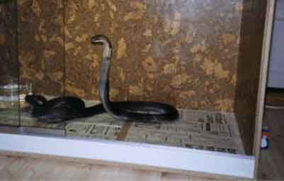 Hanna - John Kleins Cobra