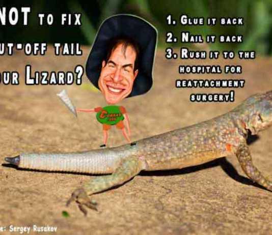 lizard facts