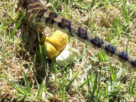 Image Gallery Snake Faeces