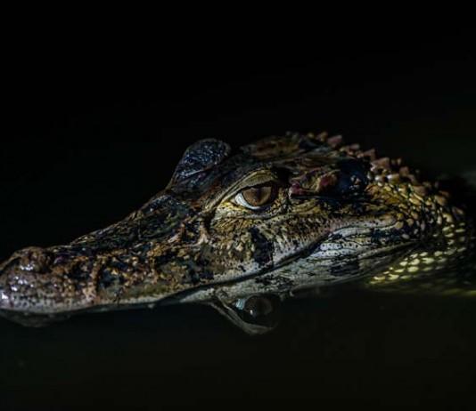 History of Crocodiles