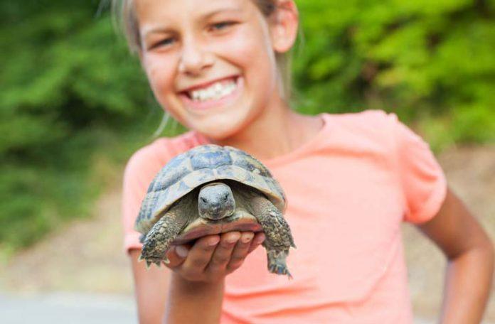 Turtle-Pet-with-Kid-by-macsim-17165975