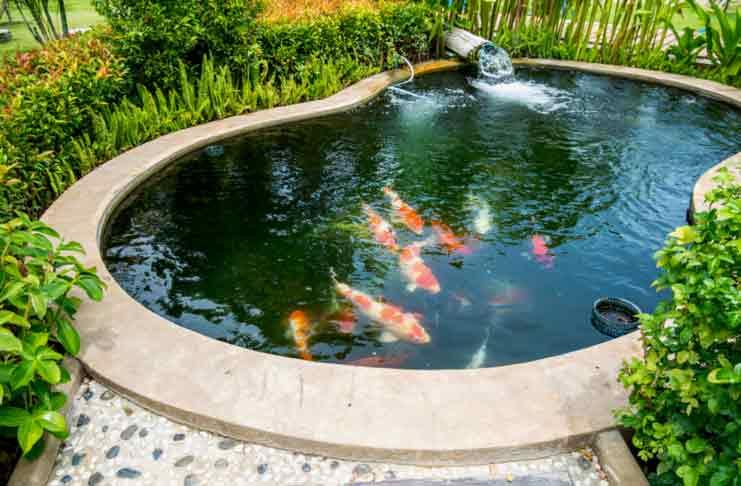 5 Secret Behind A Perfect Fish Pond