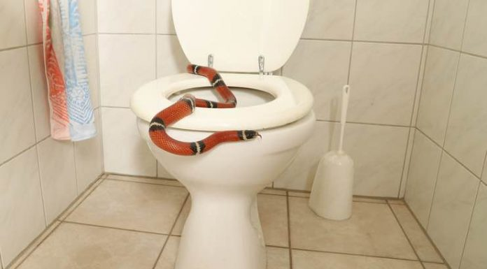 Keep Your Home Safe From Snakes