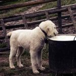 nutrients for dog