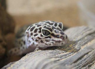 Reptilian Pets