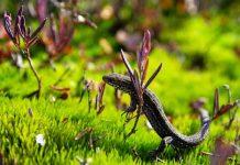 Make Your Garden More Reptile-Friendly