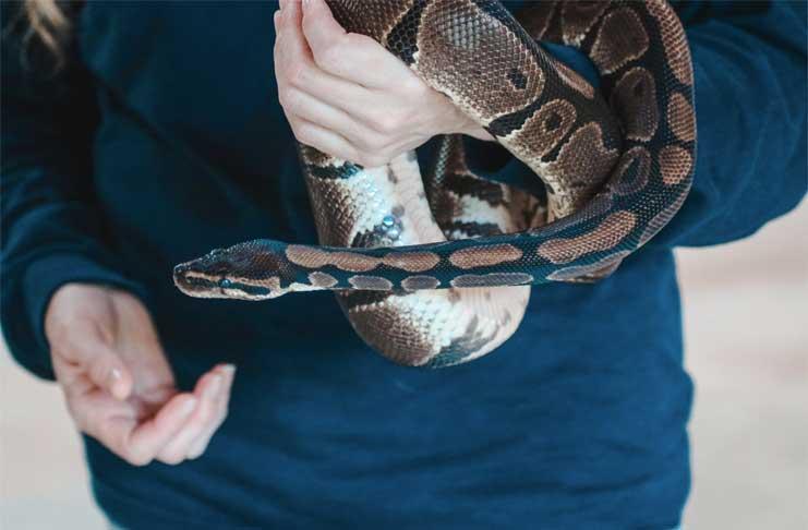 Snake Removal Service