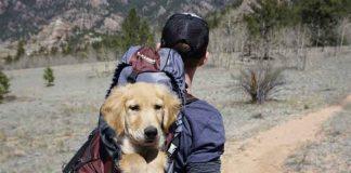 teach your puppy