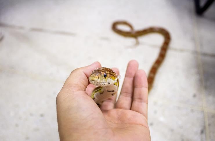 reptile care tips