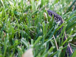 Keep Snakes Away From Your Home