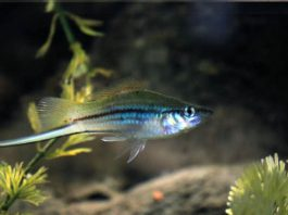 types of freshwater fish