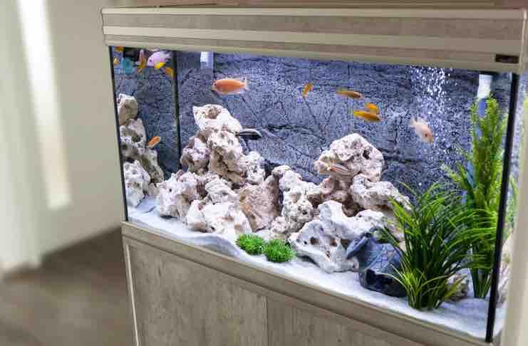 Setting Up a New Aquarium
