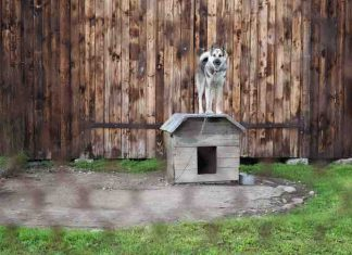 electric fence for a dog