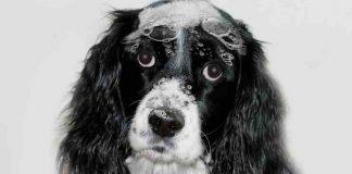 choosing a dog shampoo for itching