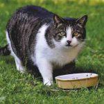 tips for cat's diet