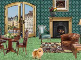 Designing Dog Friendly Apartments