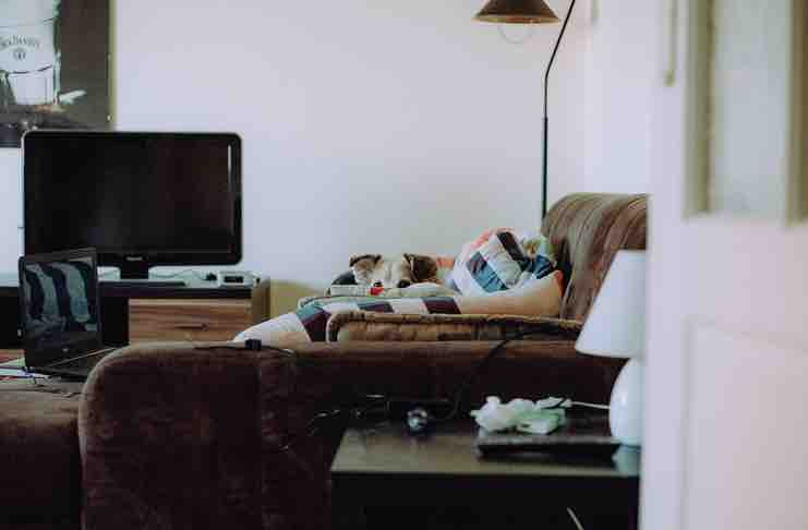 Dog Friendly Apartments