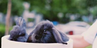 How to Take Care of A Pet Rabbit