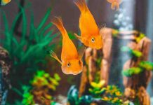 How To Choose Fish Tank Accessories And Plants