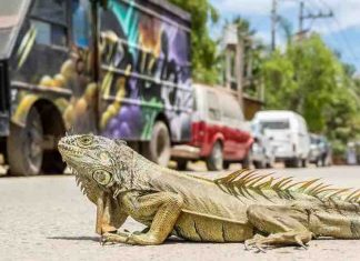 Traveling With A Reptile