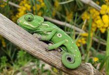 Adopt a Reptile